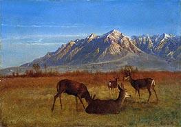 Deer in Mountain Home, c.1879 by Bierstadt | Giclée Canvas Print