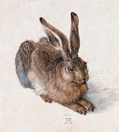 Hare, 1502 by Durer | Giclée Paper Print