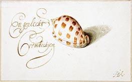 van der Ast | A Shell: Phalium Aureola, c.1660 | Giclée Paper Print