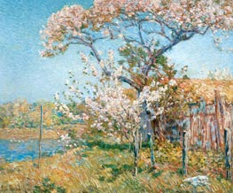 Hassam | Apple Trees in Bloom, Old Lyme | Giclée Canvas Print