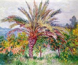Monet | Palm Tree at Bordighera, c.1884 | Giclée Canvas Print