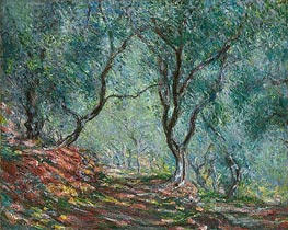 Monet | Olive Grove in the Moreno Garden, 1884 | Giclée Canvas Print
