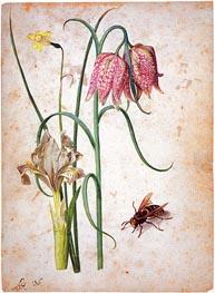 Georg Flegel | Narcissus, Iris, Fritillaria and Hornet, undated | Giclée Paper Print