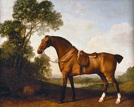 George Stubbs | A Saddled Bay Hunter | Giclée Canvas Print