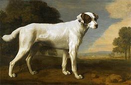 Viscount Gormanston's White Dog, 1781 by George Stubbs | Giclée Canvas Print
