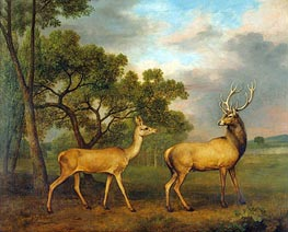 Red Deer, a Buck and a Doe, 1792 by George Stubbs | Giclée Canvas Print