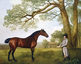 John Gascoigne with a Bay Horse, 1791 by George Stubbs | Giclée Canvas Print
