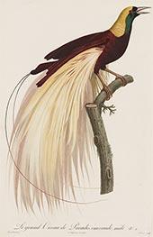 Le grand Oiseau de Paradis, Emeraude, Male, c.1801/06 by Jacques Barraband | Giclée Paper Print
