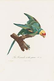 La Perruche à tête jaune, c.1801/05 by Jacques Barraband | Giclée Paper Print