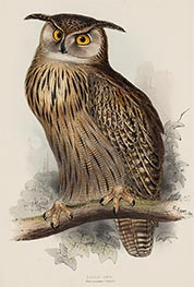 Eagle Owl. Bubo Maximus, c.1832/37 by John Gould | Giclée Paper Print