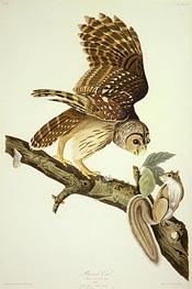 Barred Owl, 1828 by Audubon | Giclée Paper Print