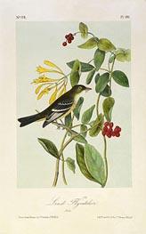 Least Flycatcher, a.1843 by Audubon | Giclée Paper Print
