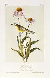 Bell's Vireo, a.1843 by Audubon | Giclée Paper Print