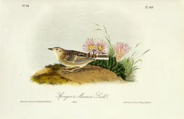 Sprague's Missouri Lark, 1844 by Audubon | Giclée Paper Print
