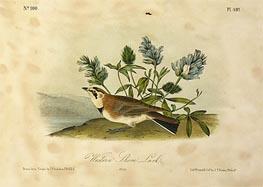 Western Shore Lark, a.1843 by Audubon | Giclée Paper Print