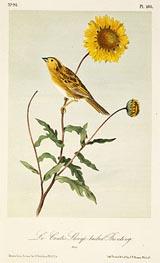 Audubon | Le Conte's Sharp-Tailed Bunting, a.1843 | Giclée Paper Print
