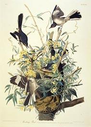 Mocking Bird, Turdus Polyglottus, c.1825 by Audubon | Giclée Paper Print