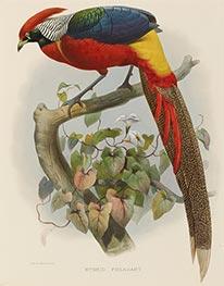 Hybrid Pheasant, c.1870/72 by Joseph Wolf | Giclée Paper Print