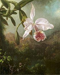 Martin Johnson Heade | Orchid Blossoms, 1873 | Giclée Canvas Print