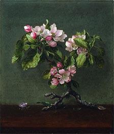 Martin Johnson Heade | Apple Blossoms, 1873 | Giclée Canvas Print