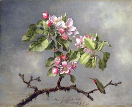 Apple Blossoms and a Hummingbird, 1875 by Martin Johnson Heade | Giclée Canvas Print