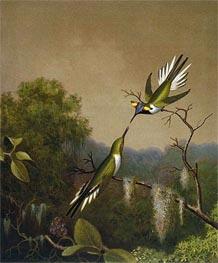 Brazilian Hummingbirds IV (Heliactin Cornuta), undated by Martin Johnson Heade | Giclée Canvas Print