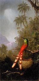 Martin Johnson Heade | Red-Tailed Comet (hummingbird) in the Andes, c.1883 | Giclée Canvas Print