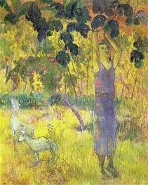 Gauguin | Man Picking Fruit from a Tree, 1897 | Giclée Canvas Print