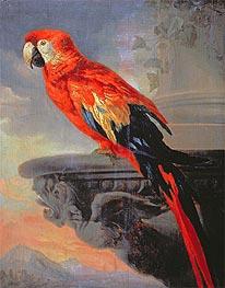 Parrot, c.1630/40 by Rubens | Giclée Canvas Print