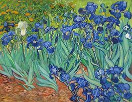 Vincent van Gogh | Irises | Giclée Canvas Print