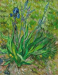 Vincent van Gogh | The Iris | Giclée Canvas Print