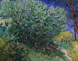 Vincent van Gogh   Lilac Bush (Lilacs), 1889   Giclée Canvas Print