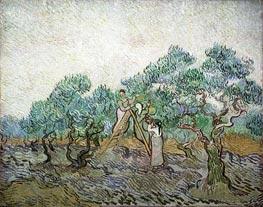 Vincent van Gogh | The Olive Orchard, 1889 | Giclée Canvas Print