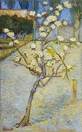 Vincent van Gogh | Blossoming Pear Tree, 1888 | Giclée Canvas Print