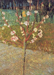 Vincent van Gogh | Flowering Almond Tree, 1888 | Giclée Canvas Print