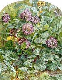 Red Clover with Butter-and-Eggs and Ground Ivy, 1860 by William Trost Richards | Giclée Paper Print